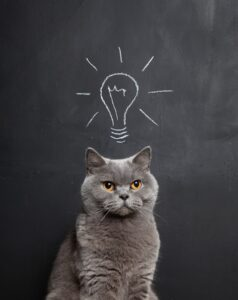 cat-and-lightbulb