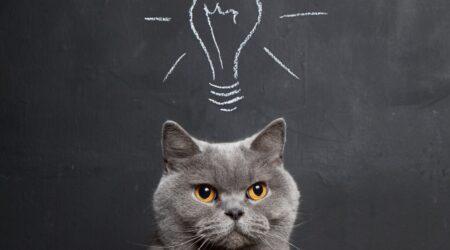 cat-and-lightbulb